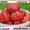 Саженцы клубники(не усы)новейшего крупноплодного  сорта Чамора Куруси-почтой.