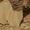 камень песчаник тигровый  #1675957