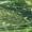 Семена ячменя озимого сорт Ерёма,  Виват,  Фокс 1,  Тимофей #1688278