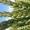 Семена озимой пшеницы Аксинья , Жаворонок,  Кавалерка,  Есаул,  Собербаш,  Лига1,  Дон #1688280