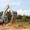 Долгосрочная Аренда Самосвальных машин и Спецтехники #1693439