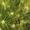 Семена ячменя озимого  Виват,   Ерема,   Маруся,   Тимофей,   Фокс1.  #1712103