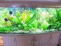 аквариум 410 литров