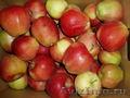 Наша Компания предлагает оптовые поставки яблок из Польши. , Объявление #265263