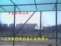 СЖМ/Вавилова / Урожай 5-10 соток.
